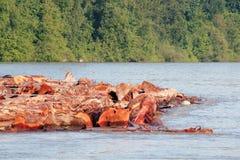 Processing Raw Logs Stock Photos