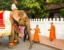 Processione dell'elefante per Lao New Year 2014 in Luang Prabang, Laos Immagine Stock