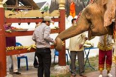 Processione dell'elefante per Lao New Year 2014 in Luang Prabang, Laos fotografie stock libere da diritti
