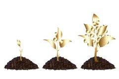 Processo da vida de árvore dourada Imagens de Stock Royalty Free