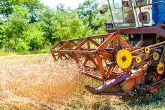 Processo de colheita com liga, recolhendo colheitas de grão maduras Fotografia de Stock