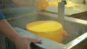 Processo de empacotamento do queijo Alimento da produção Processo de manufatura da fábrica de queijo video estoque
