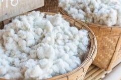 Processo de fazer o algodão: algodão cru Foto de Stock