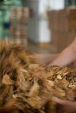 Processo de manufatura do cigarro Foto de Stock Royalty Free