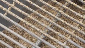 processo della fabbrica Mulini schiacciati del grano in apparecchiatura di fresatura attraverso grata archivi video