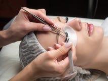 Processo di estensione del ciglio Fronte femminile con gli occhi chiusi e le sferze e la toppa nere lunghe del cotone sotto, fine immagini stock