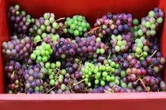 Processo di fabbricazione del vino Immagini Stock