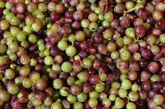 Processo di fabbricazione del vino Fotografia Stock Libera da Diritti