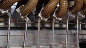 Processo di lavoro della produzione dei piselli sul conservificio Piselli maturi che lavano in acqua prima della conservazione stock footage