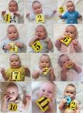 Processo do crescimento do bebê durante o ano Fotografia de Stock Royalty Free