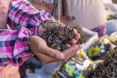 processo a secco del tè verde organico dopo selezionato a disposizione nel mercato Immagine Stock Libera da Diritti