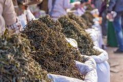 processo a secco del tè verde organico dopo selezionato nel mercato Immagini Stock