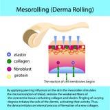 Processus de Mesorolling avec un describtion et une structure cellulaire illustration stock