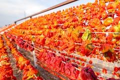 Processus de séchage de poivre traditionnel dans Gaziantep, Turquie images libres de droits