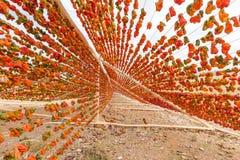Processus de séchage de poivre traditionnel dans Gaziantep, Turquie photos stock