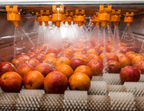 Processus orange de nettoyage Image libre de droits