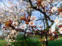Prochaines fleurs de source Images libres de droits