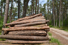 Procurement of wood in the pine wood Royalty Free Stock Images