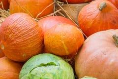 Prodotti agricoli di autunno Raccolta d'autunno Immagine Stock Libera da Diritti