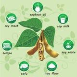 Prodotti alimentari dal infographics della soia Fotografia Stock