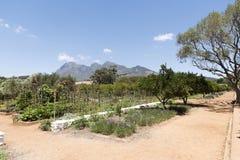 Prodotti che sono cresciuti in un grande giardino La Sudafrica Immagine Stock Libera da Diritti