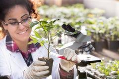 Prodotti chimici di versamento del biologo in vaso con il germoglio Fotografia Stock