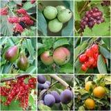 Prodotti del frutteto Fotografia Stock Libera da Diritti