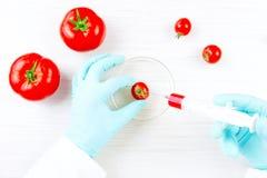 Prodotti del gmo di prova Immagine Stock