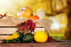 Prodotti di agricoltura di autunno su legno Immagini Stock Libere da Diritti