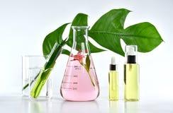 Prodotti di bellezza naturali di cura di pelle, estrazione organica naturale di botanica e cristalleria scientifica fotografie stock libere da diritti