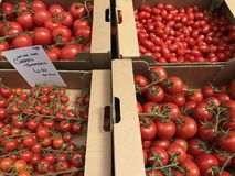 Prodotti freschi, varietà differenti di pomodori succosi e rossi fotografie stock libere da diritti