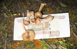 Prodotti russi, funghi marinati in secchi sul contatore del deposito Sulle etichette sono scritti i nomi dei funghi in Russ fotografia stock
