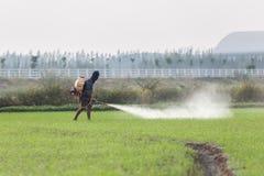 Prodotto chimico di spruzzatura dell'agricoltore per inverdirsi il giovane giacimento del riso Immagini Stock