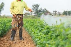 Prodotto chimico di spruzzatura tailandese locale del giardiniere o dell'agricoltore nel flusso del tagete Fotografia Stock