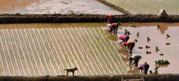 Produção agrícola Fotografia de Stock