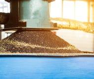 Produção de óleo de colza, processamento da colza da semente oleaginosa, fonte de sementes oleaginosas de colza à imprensa da pre fotografia de stock