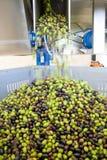 Produção de azeite virgem fresca em uma fábrica da frio-imprensa após a colheita verde-oliva imagens de stock