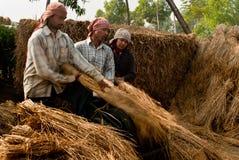 Produção de colheitas foto de stock