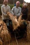Produção de colheitas foto de stock royalty free