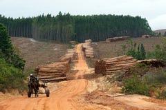 Produção de madeira Fotografia de Stock Royalty Free