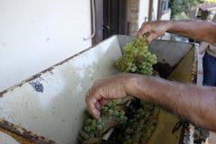 Produção de vinho caseiro Fotografia de Stock