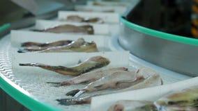 Produção do marisco da fábrica dos peixes vídeos de arquivo