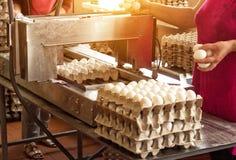 A produção para classificar a galinha eggs, o processo de seleção de ovos da galinha, close-up, triagem fotografia de stock royalty free