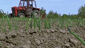 Producción agrícola de verduras orgánicas metrajes