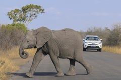 Producción al camino de la travesía del elefante del bebé fotos de archivo libres de regalías