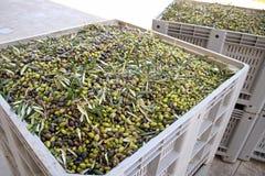 Producción de aceite de oliva fotos de archivo