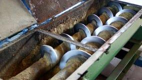 Producción de aceite de rabina, proceso de la rabina de la semilla oleaginosa, fuente de semillas oleaginosas de rabina a la pren metrajes