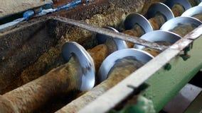 Producción de aceite de rabina, proceso de la rabina de la semilla oleaginosa, fuente de semillas oleaginosas de rabina a la pren almacen de video