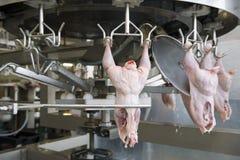 Producción de carne blanca Imagenes de archivo