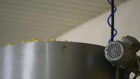 Producción de la fábrica de palillos del maíz dulce almacen de video